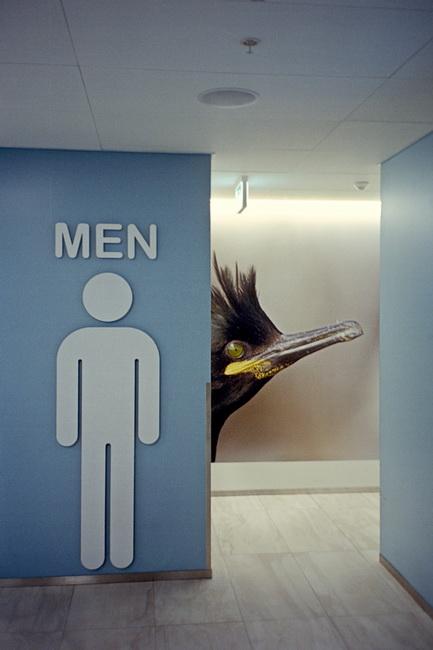 Male Bird